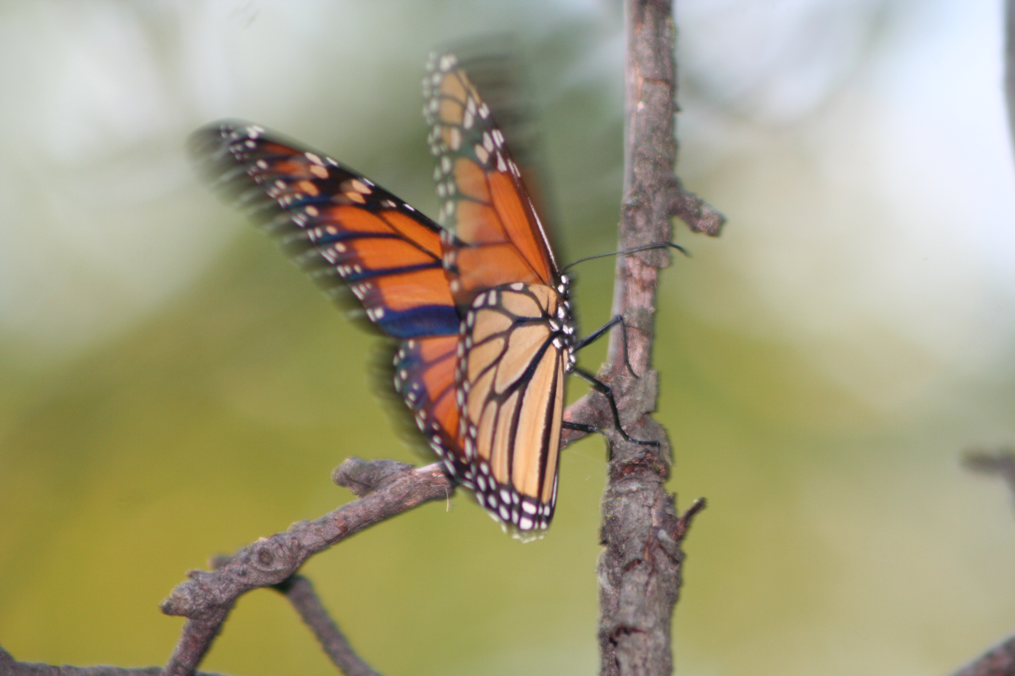 Monarch at Marshview Meadows