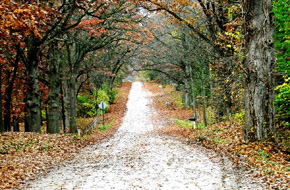 Road covered with leaves