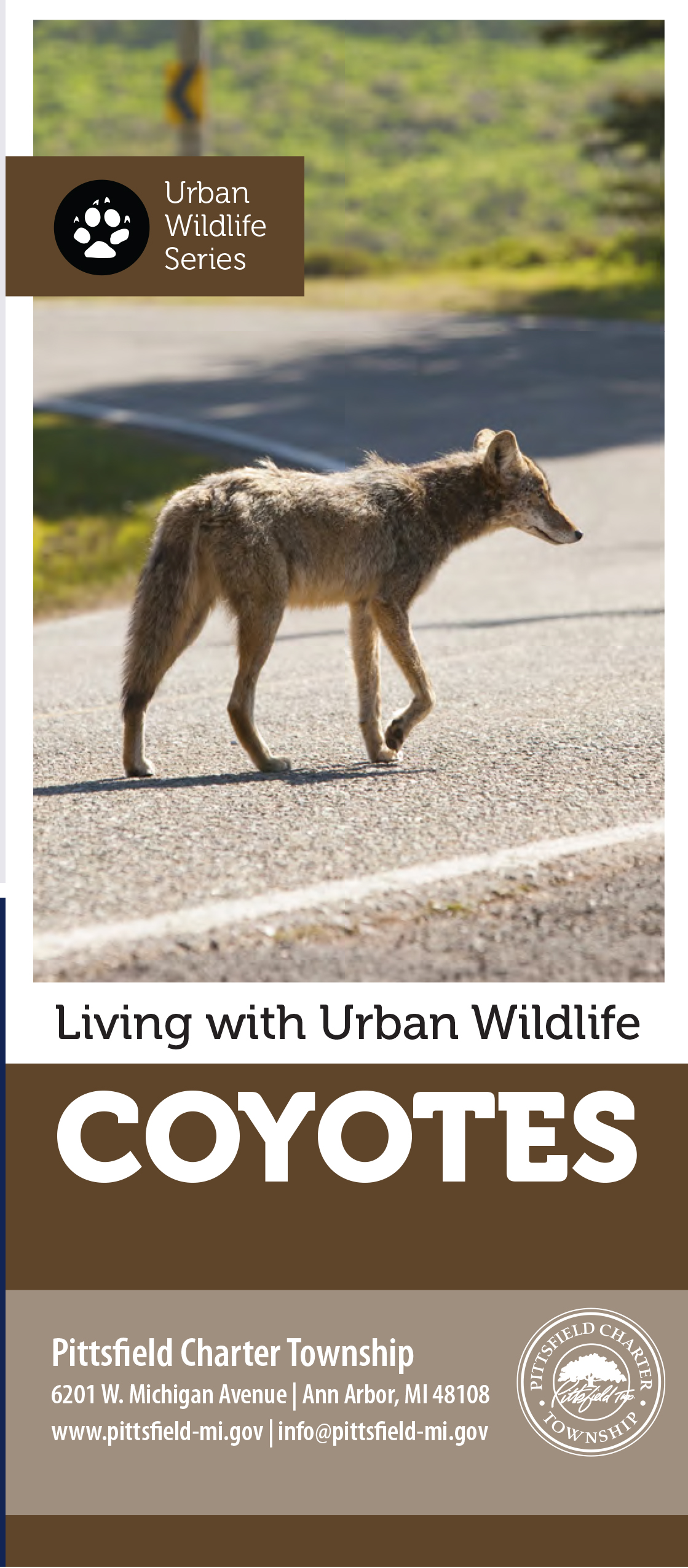 coyotes Opens in new window